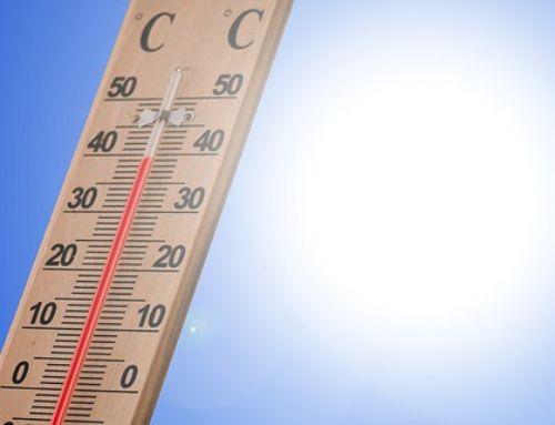 Ako vplýva teplé počasie na našu záhradu?