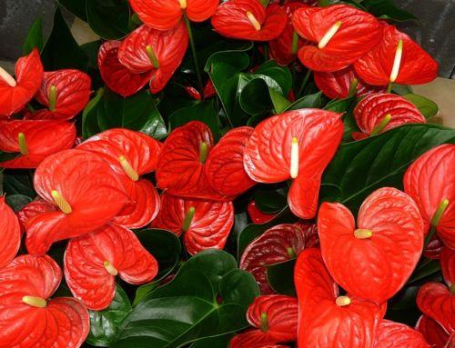 Prírodný doping pre izbové rastliny