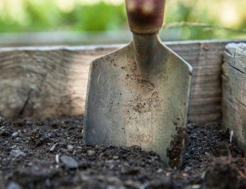 Správny štart vašej záhrady